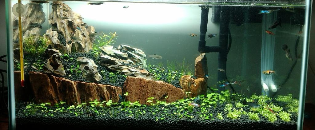 aquariums 15