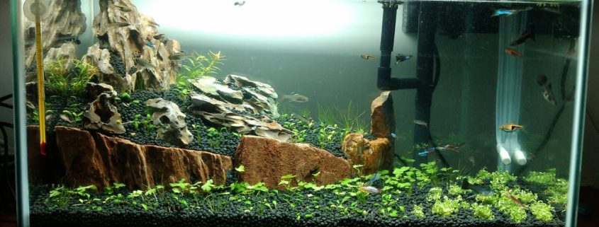Different Style Of Aquariums For Your Reference Hongjia